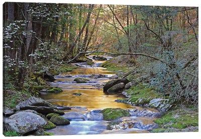 Colorful Creek Canvas Art Print