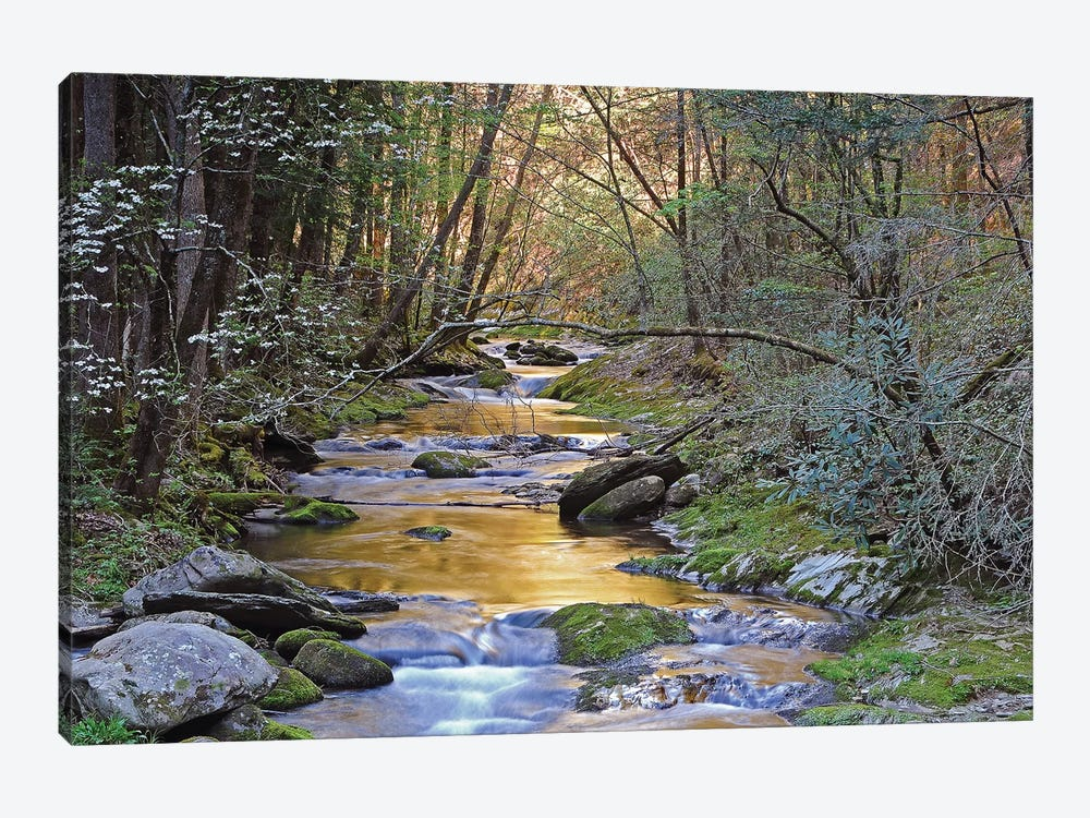 Colorful Creek by Brian Wolf 1-piece Canvas Artwork