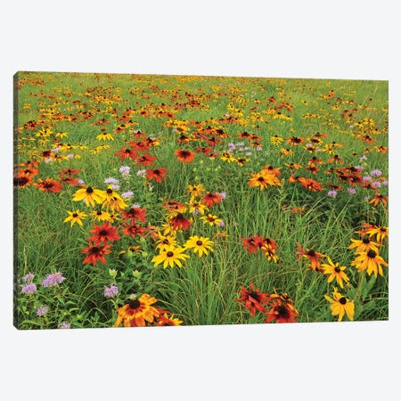 Colorful Prairie Canvas Print #BWF92} by Brian Wolf Canvas Art