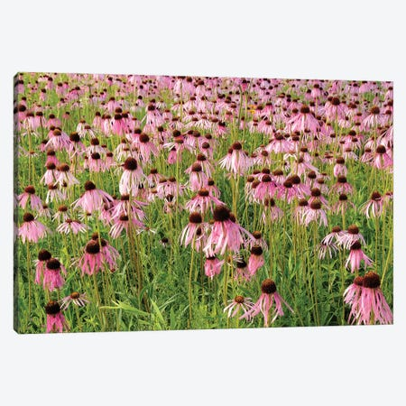 Coneflower Bouquet Canvas Print #BWF95} by Brian Wolf Canvas Art Print