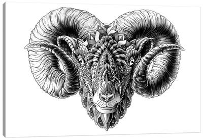 Ram's Head Canvas Art Print
