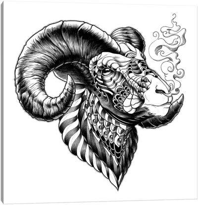 Big Horn Sheep Canvas Art Print