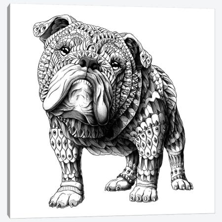 English Bulldog Canvas Print #BWZ48} by Bioworkz Canvas Print