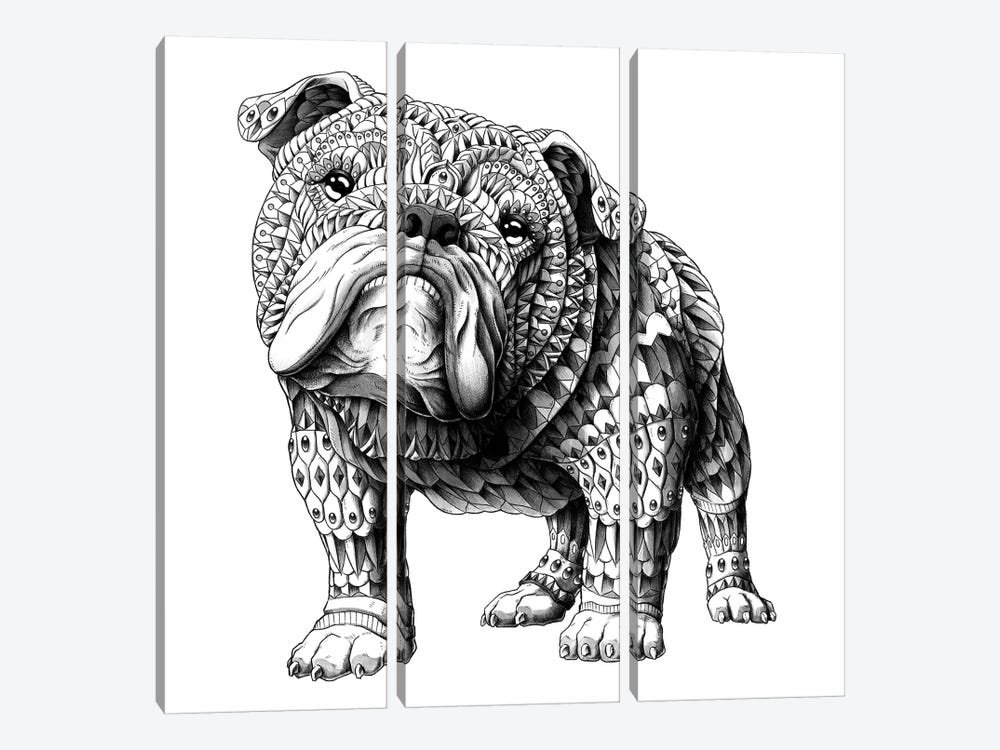 English Bulldog by Bioworkz 3-piece Canvas Art Print