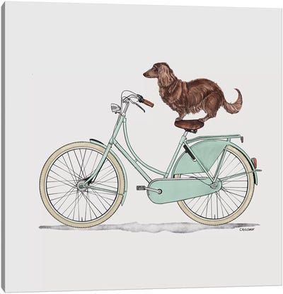 Dachshund On Bicycle Canvas Art Print