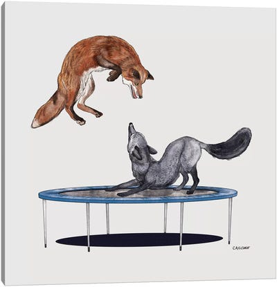 Foxes On Trampoline Canvas Art Print