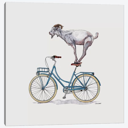 Goat On Bicycle Canvas Print #CAE22} by Carolynn Elshof Art Print