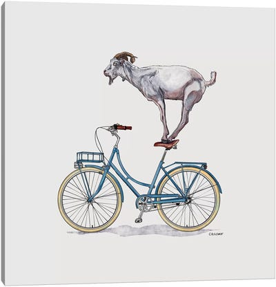Goat On Bicycle Canvas Art Print