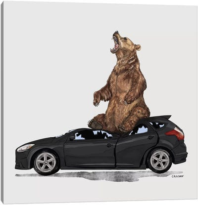 Grizzly Bear On Ford Focus Canvas Art Print