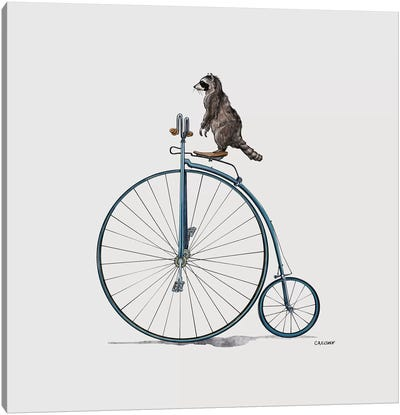Raccoon On Pennyfarthing Canvas Art Print