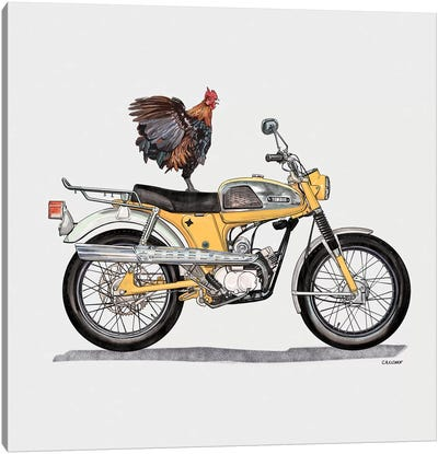 Rooster On Yamaha Canvas Art Print