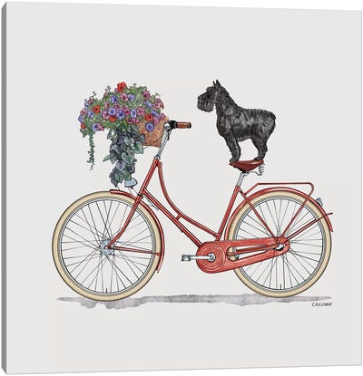 Schnauzer On Bicycle Canvas Art Print