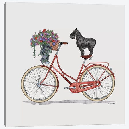 Schnauzer On Bicycle Canvas Print #CAE43} by Carolynn Elshof Canvas Print