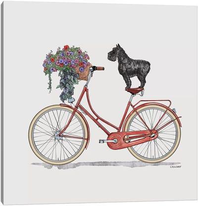 Schnauzer On Bicycle Canvas Art Print