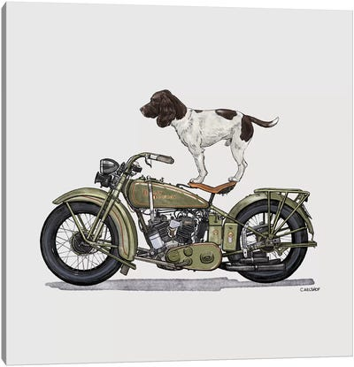 Springer Spaniel On Motorcycle Canvas Art Print