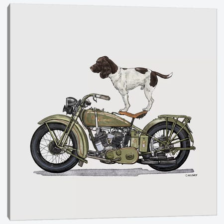 Springer Spaniel On Motorcycle Canvas Print #CAE46} by Carolynn Elshof Canvas Art