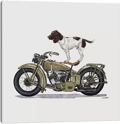 Springer Spaniel On Motorcycle Canvas Art Print