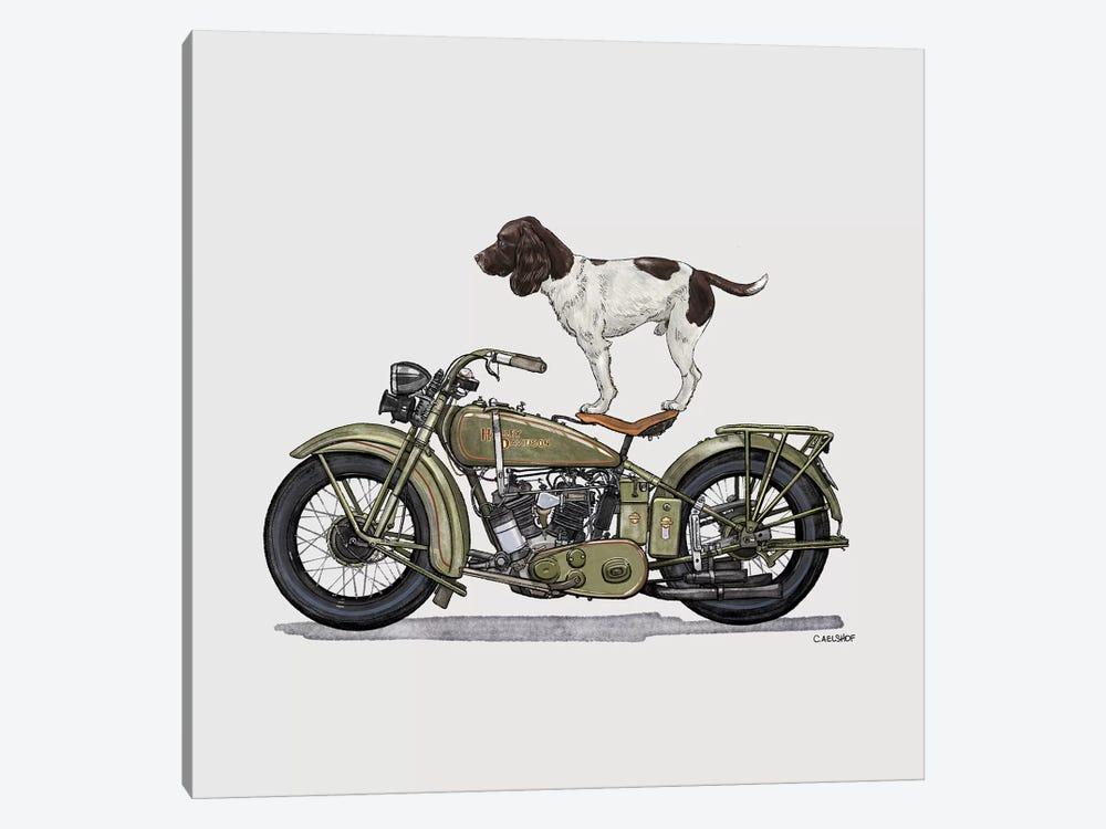 Springer Spaniel On Motorcycle by Carolynn Elshof 1-piece Art Print