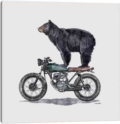 Black Bear On Motorcycle Canvas Art Print