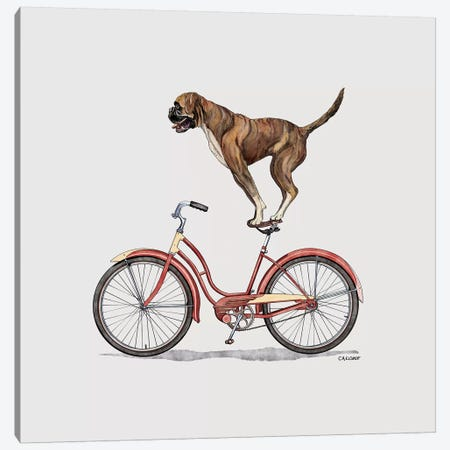 Boxer On Bicycle Canvas Print #CAE8} by Carolynn Elshof Canvas Print