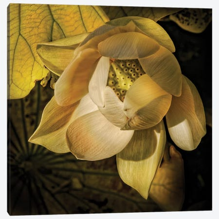 Blooming Yellow Canvas Print #CAL81} by Mike Calascibetta Canvas Art