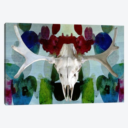 Moose Skull #3 Canvas Print #CAN18F} by Unknown Artist Canvas Artwork
