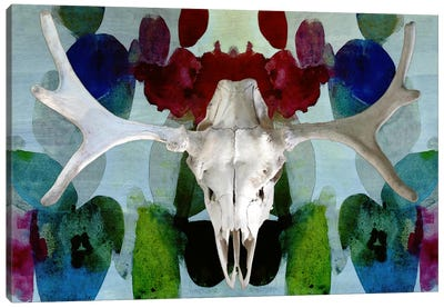 Moose Skull #3 Canvas Art Print