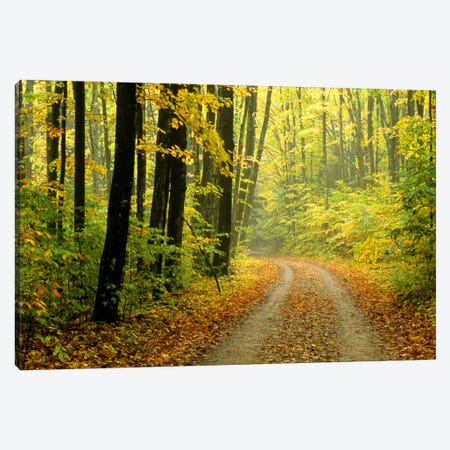 Autumn Forest Landscape, Michigan, USA Canvas Print #CAR1} by Mark Carlson Canvas Print