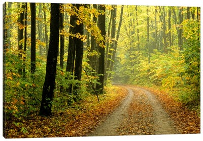 Autumn Forest Landscape, Michigan, USA Canvas Art Print