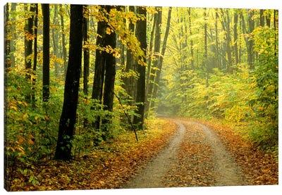 Autumn Forest Landscape, Michigan, USA Canvas Art Print