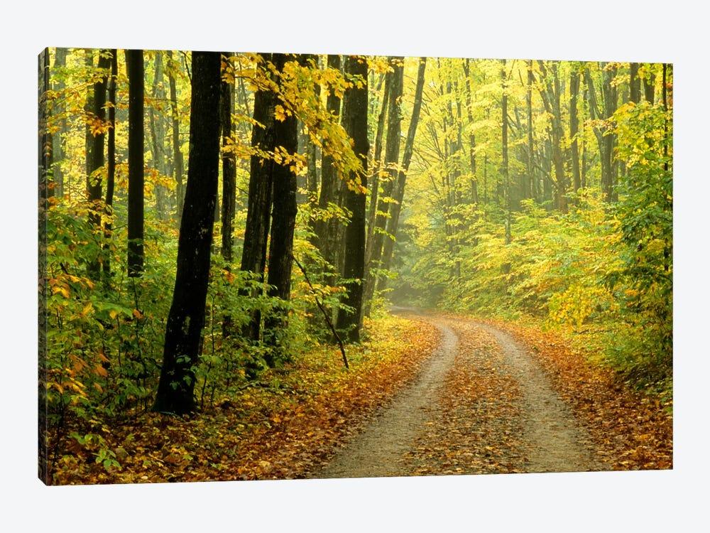 Autumn Forest Landscape, Michigan, USA by Mark Carlson 1-piece Canvas Print