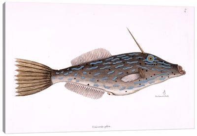Catesby's Natural History Series: Bahama Unicorn Fish Canvas Print #CAT10