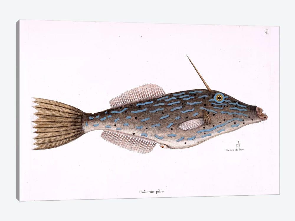 Bahama Unicorn Fish by Mark Catesby 1-piece Canvas Wall Art