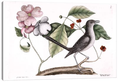 Mockbird (Northern Mockingbird) & Dogwood Tree Canvas Art Print