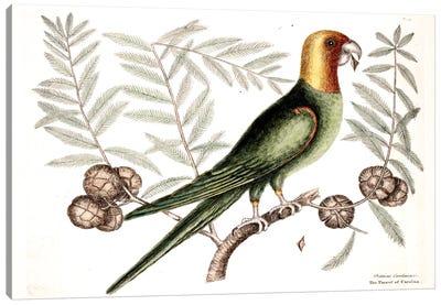 Parrot Of Carolina & Cypress Of America Canvas Art Print