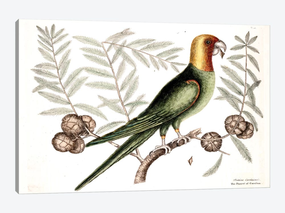 Parrot Of Carolina & Cypress Of America by Mark Catesby 1-piece Canvas Art Print
