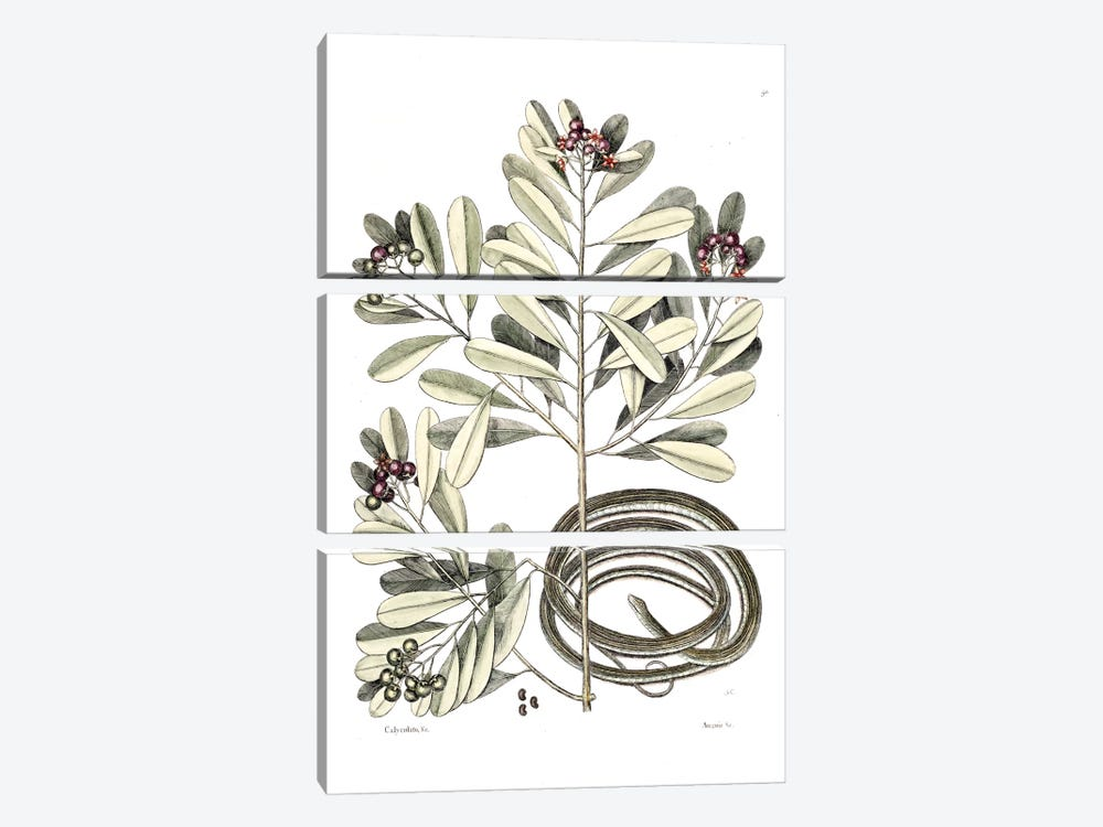 Ribbon Snake & Winter's Bark 3-piece Canvas Wall Art
