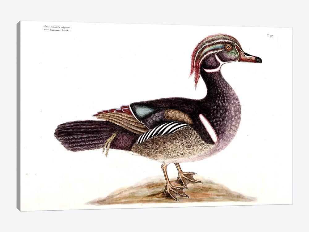 Summer (Carolina) Duck by Mark Catesby 1-piece Canvas Wall Art