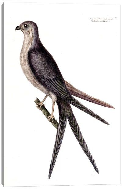 Swallow-Tailed Hawk Canvas Art Print