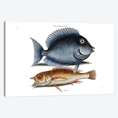 Tang & Yellow Fish Canvas Print #CAT165} by Mark Catesby Canvas Print