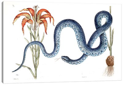 Wampum Snake & Red Lilly Canvas Art Print