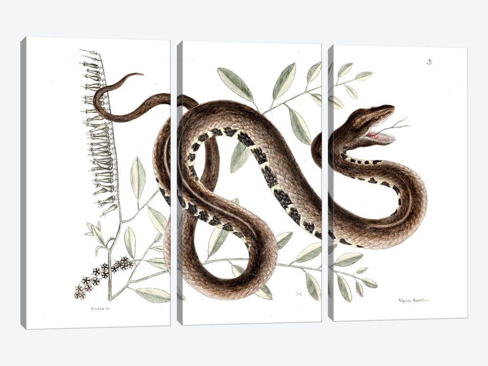 Water Viper & Andromeda Paniculata by Mark Catesby 3-piece Canvas Print