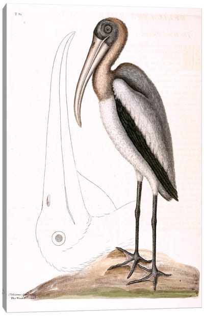 Wood Pelican Canvas Art Print