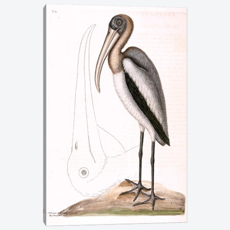 Wood Pelican Canvas Print #CAT180} by Mark Catesby Canvas Artwork