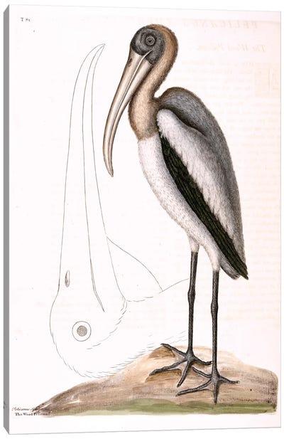 Wood Pelican Canvas Art Print