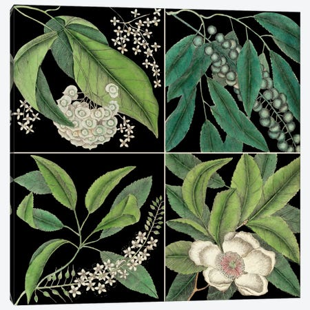 Botanical Grid I Canvas Print #CAT187} by Mark Catesby Art Print