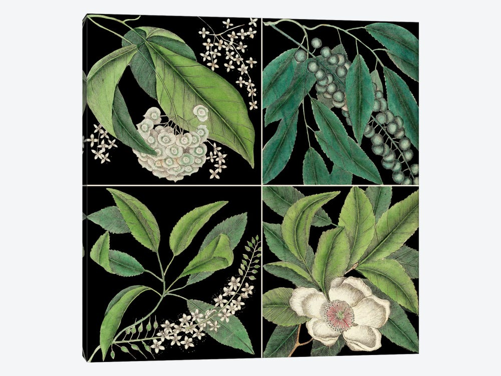 Botanical Grid I by Mark Catesby 1-piece Canvas Art Print
