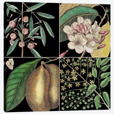 Botanical Grid II Canvas Print #CAT188} by Mark Catesby Canvas Art