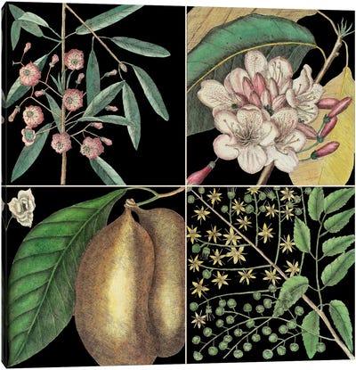 Botanical Grid II Canvas Art Print