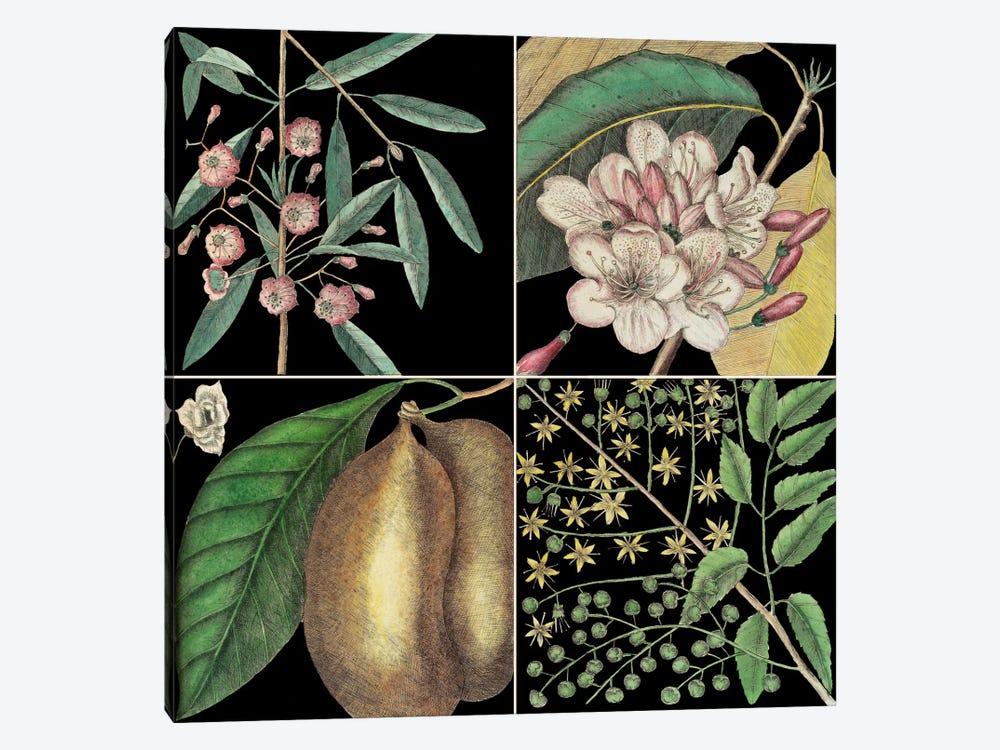 Botanical Grid II by Mark Catesby 1-piece Canvas Art